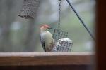 WoodpeckerSnow-200901230.jpg